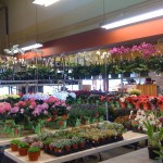 Visit to the Wholesaler :: San Francisco Flower Mart