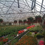 Jordan's Greenhouse, Fort Collins, CO