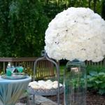 Vote for your favorite Carnation Design