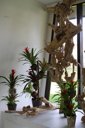 The Orchids of Keukenhof Gardens, #1