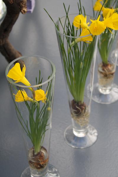 Daffodil Display of Keukenhof Gardens