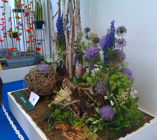 allium display