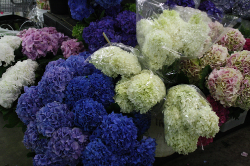 Amato's Wholesale Floral Design Show