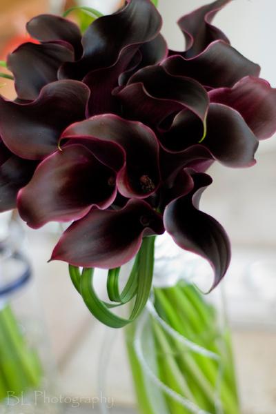Fabulous Florist :: anastasia ehlers floral design
