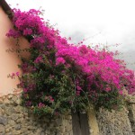 bougainvillea growing on the sides of buildings in Ollantaytambo