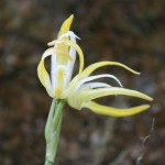 Monteverde Orchid Garden (Jardin de Orquideas)