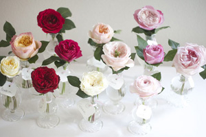 colors of David Austin roses