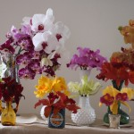 Selection of orchids from Mayesh Wholesale
