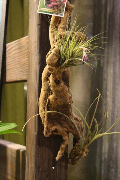 A few last photos from Philadelphia Flower Show