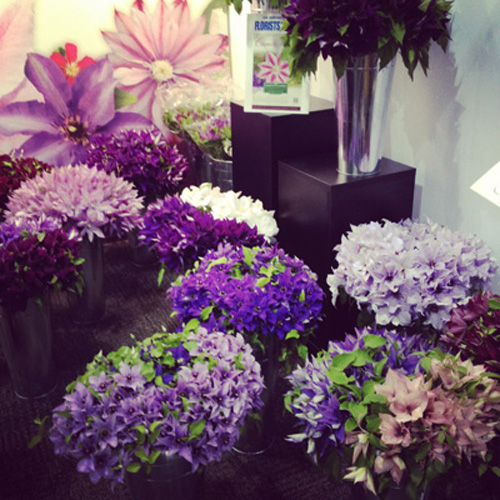 World Floral Expo – Clematis!