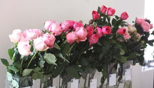 Pink Garden Rose Varieties by Florabundance