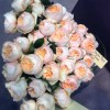 Peach Juliet Garden Rose