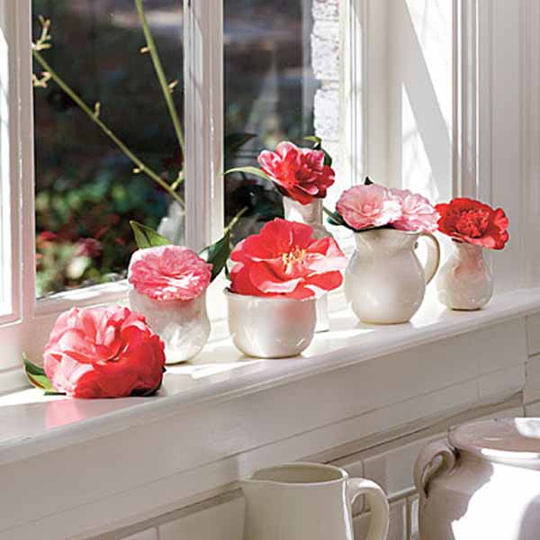 pink camellia flowers