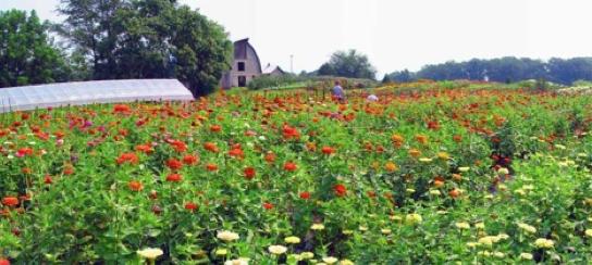 LynnVale Farm