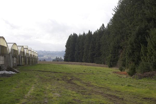greenhouse Oregon