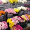 New York Flower District : G Page