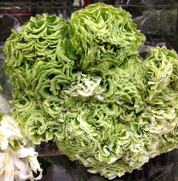 green ranunculus