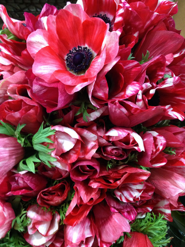 red and white anemones