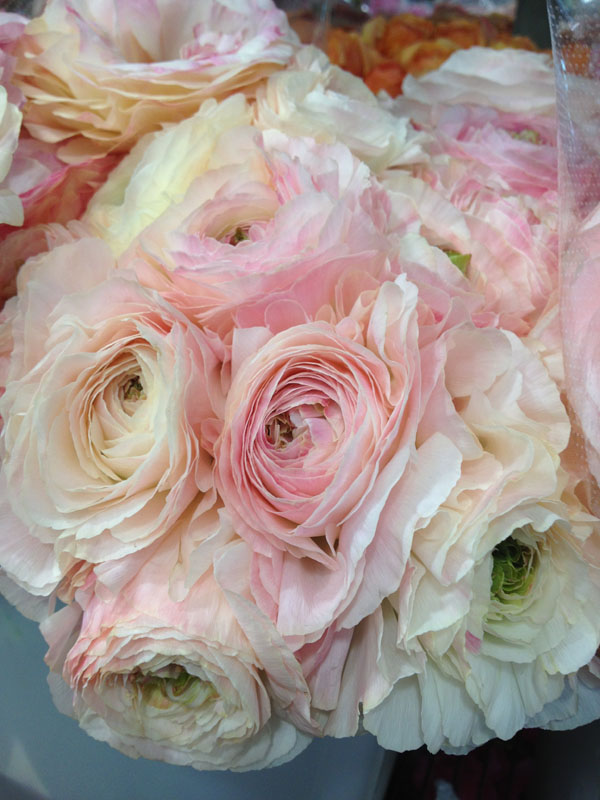 blush ranunculus - Blush Garden Rose Bouquet