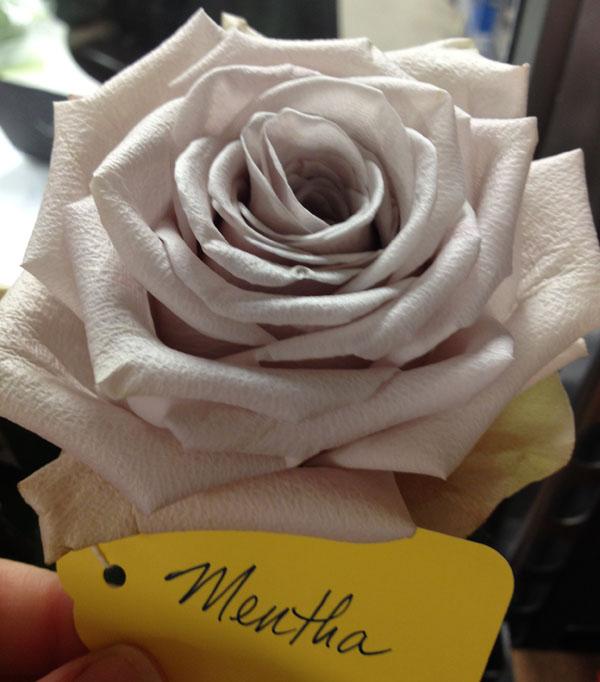 silver lavender rose