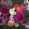 ranunculus and sweetpeas arrangement