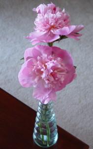 pink peonies in a bud vase