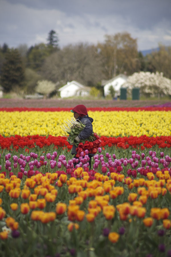 tulip farm worker