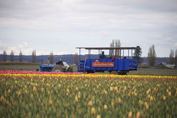 tulip trolley