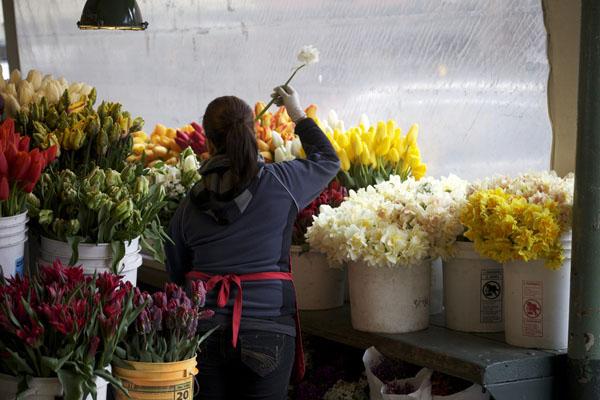 tulips and daffodils on display