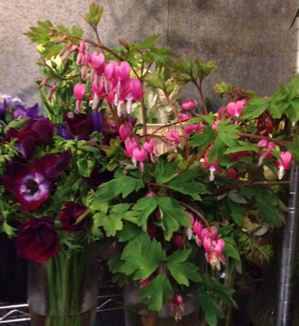anemones and bleeding hearts