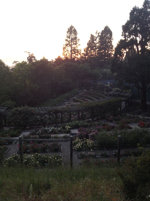 Excellent Flower Adventures :: Berkeley Rose Garden & Morcom Rose Garden