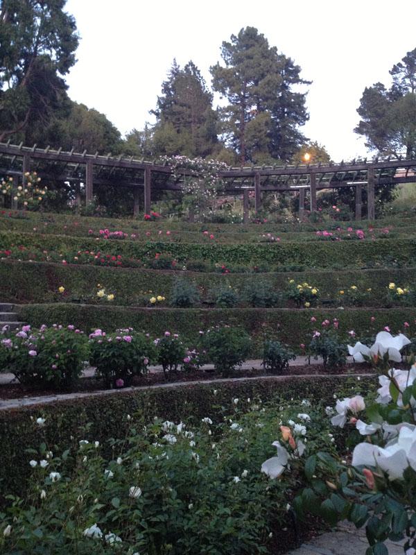 Berkeley Rose Garden