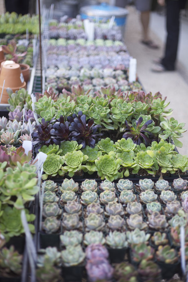 succulents at flora grubb