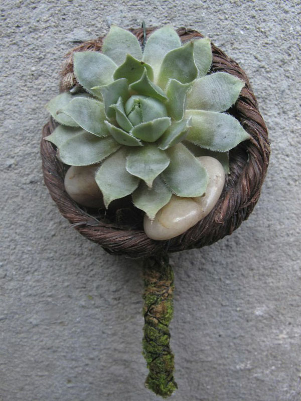 boutonniere with succulent