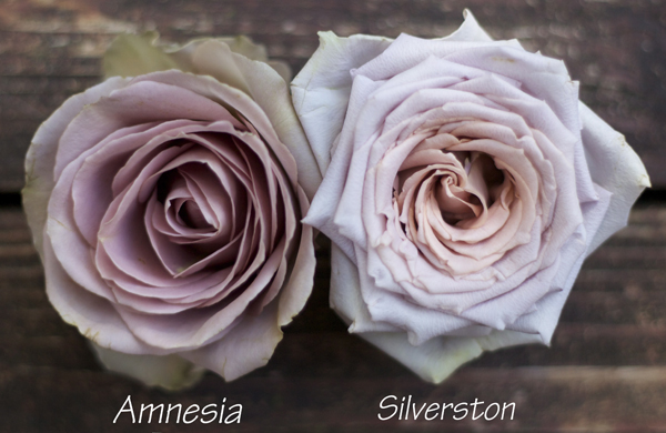 The Lavender Amp Purple Rose Study Flirty Fleurs The