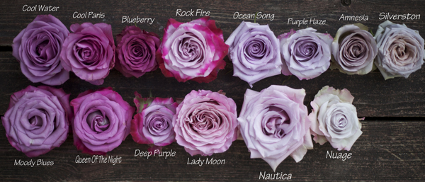 types of purple roses
