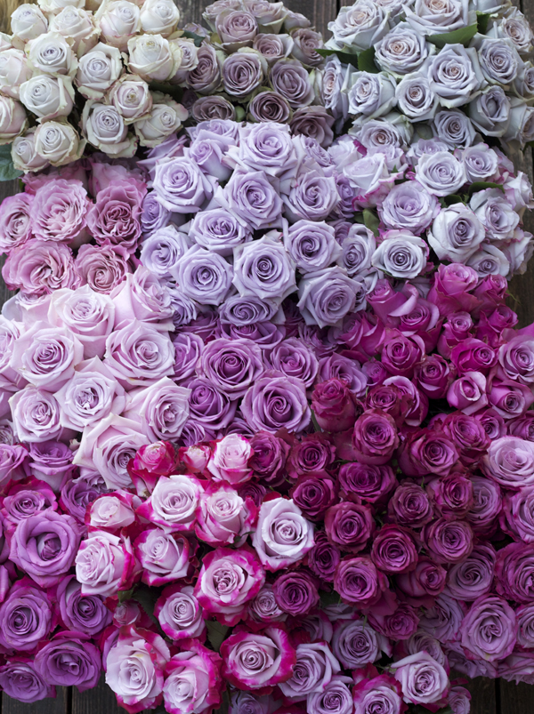 Varieties of Purple Roses