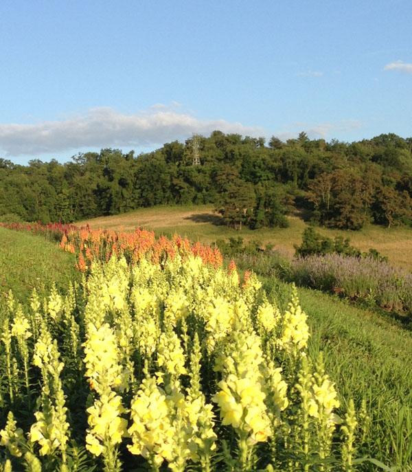 Flower farm focus destiny hill farm washington for Flower hill farms
