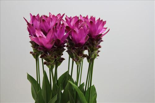 unique magenta flower