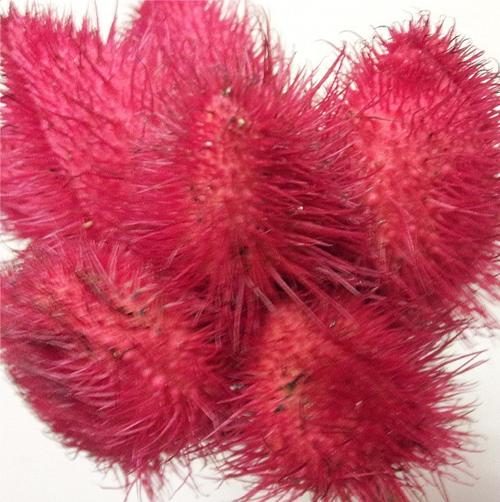 unique red pod flowers