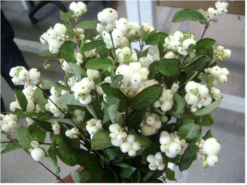 white berries for arrangements