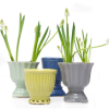 cute color urns