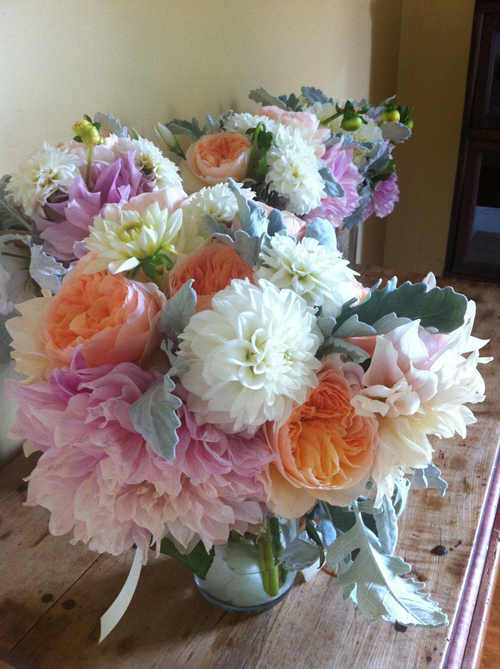 dahlias and juliet garden rose with dusty miller flowers
