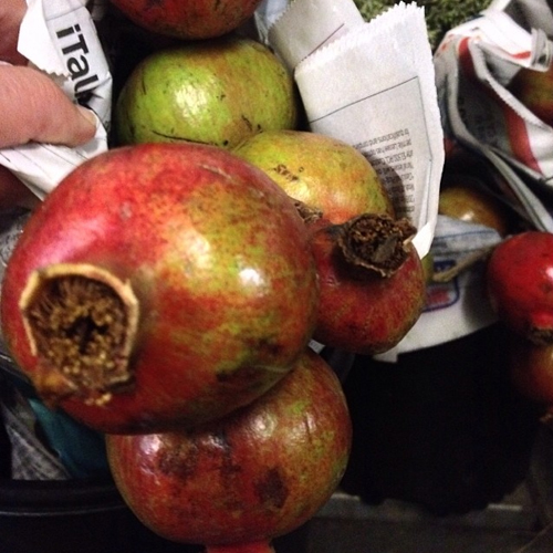 pomegranates for florists