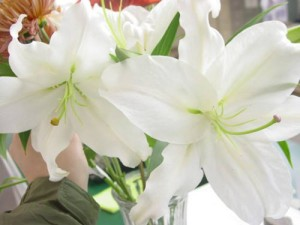 large white lilies