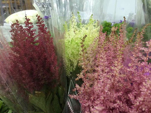 red white and pink astilbe