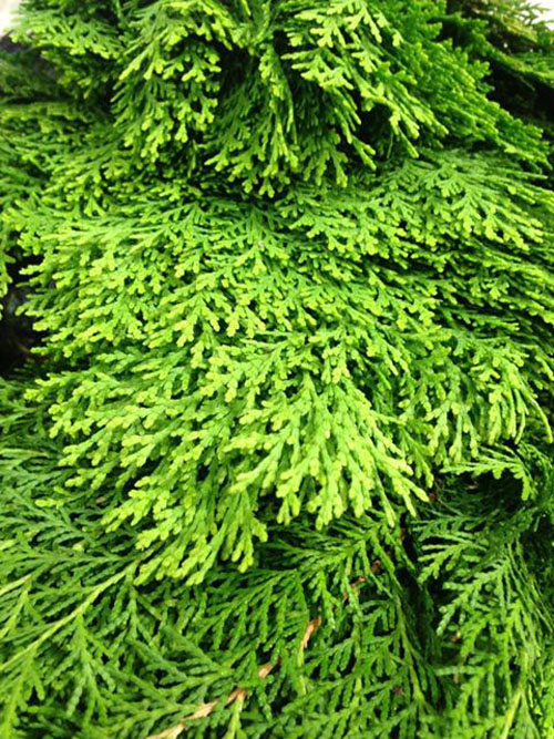 greenery for holidays