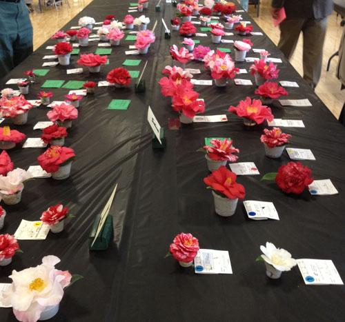 Camellia Flower Show