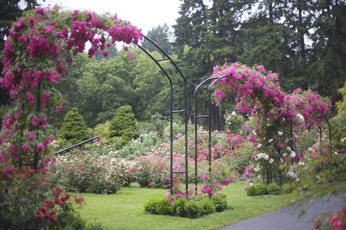 International Rose Garden in Portland