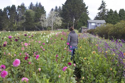 Flora Organica Arcata California